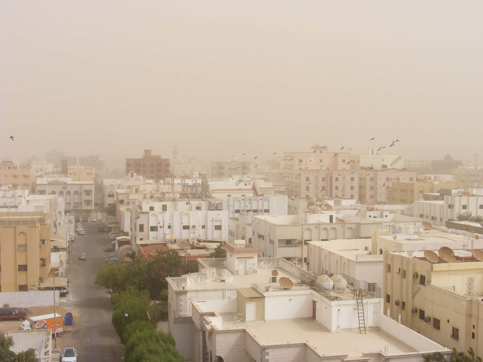 Αλλεργική Ρινίτιδα και σκόνη