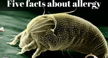 five-facts-about-allergy
