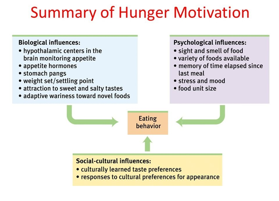 hunger-motivation